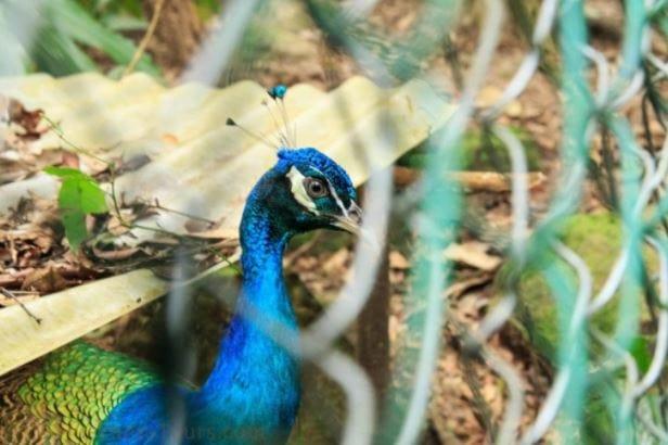 Phong Nha Botanical garden trekking 1D - Phong Nha Locals Travel